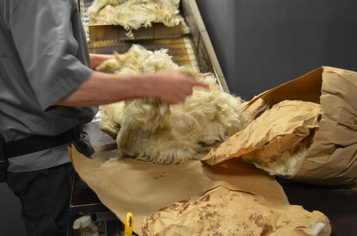 Innsamling av ull