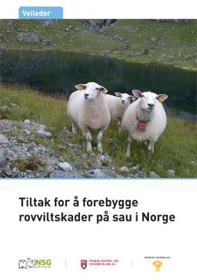 Muflon sau i norge